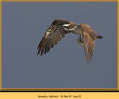 osprey-17.jpg