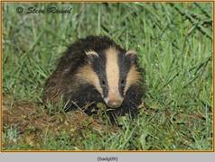 badger-09.jpg
