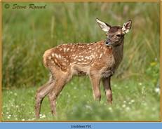 red-deer-79.jpg