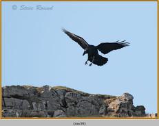 raven-39.jpg