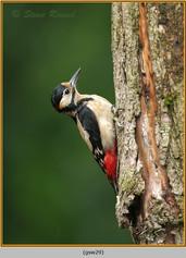 gt-s-woodpecker-29.jpg