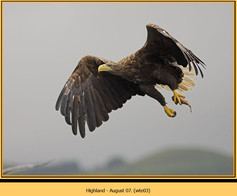 white-tailed-eagle-03.jpg