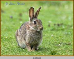 rabbit-07.jpg