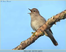 nightingale-12.jpg