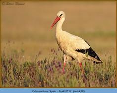 white-stork-28.jpg