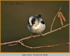 long-tailed-tit-26.jpg