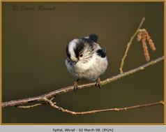 long-tailed-tit-26.jpg