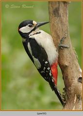 gt-s-woodpecker-50.jpg