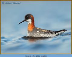 red-necked-phalarope-26.jpg
