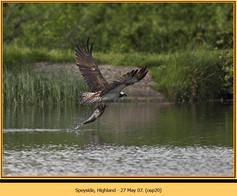 osprey-20.jpg