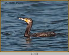 cormorant-27.jpg