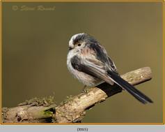 long-tailed-tit-65.jpg