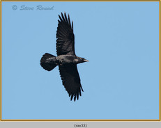 raven-33.jpg