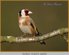 goldfinch-39.jpg