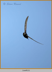 swift-13.jpg