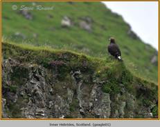 golden-eagle-01.jpg