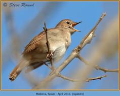 nightingale-10.jpg