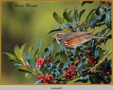 redwing-49.jpg