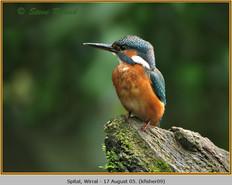 kingfisher-09.jpg