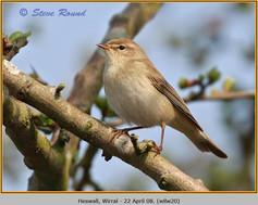 willow-warbler-20.jpg