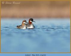 red-necked-phalarope-32.jpg