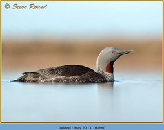 red-throated-diver- 90.jpg