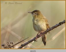 grasshopper-warbler-26.jpg