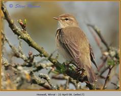 willow-warbler-17.jpg