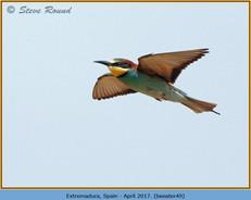 bee-eater-49.jpg