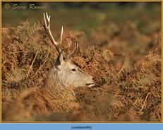 red-deer-89.jpg