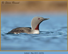 red-throated-diver- 76.jpg