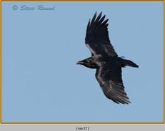 raven-37.jpg