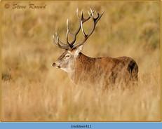 red-deer-41.jpg