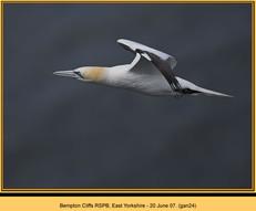 gannet-24.jpg