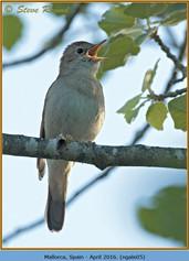 nightingale-05.jpg