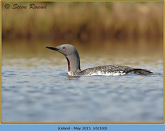 red-throated-diver-100.jpg