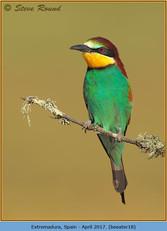 bee-eater-18.jpg