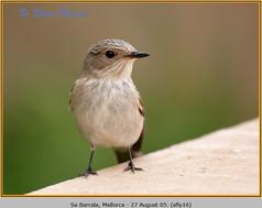 spotted-flycatcher-16.jpg