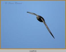swift-16.jpg