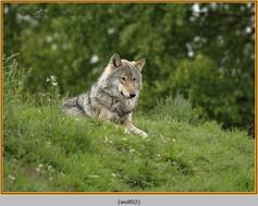 wolf-02.jpg