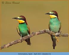 bee-eater-13.jpg