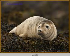 grey-seal-01.jpg