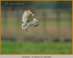 barn-owl-09.jpg