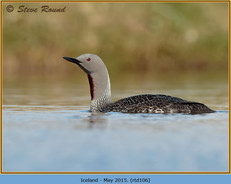 red-throated-diver-106.jpg