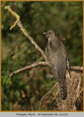 cuckoo-25.jpg