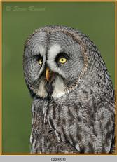 great-grey-owl-01.jpg