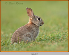 rabbit-17.jpg