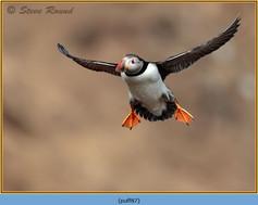 puffin- 87.jpg