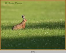 brown-hare-76.jpg