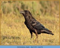 raven-55.jpg